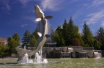 In the center of the town of Campbellton, New Brunswick a large Atlantic Salmon monument is displayed in the fountain.