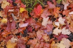 Photo: Autumn Color Algonquin Provincial Park Ontario