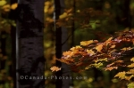 Photo: Autumn Colored Forest Algonquin Provincial Park