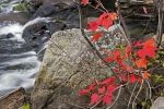 Photo: Autumn Colored Leaves Oxtongue River Ontario Canada