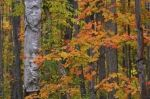 Photo: Autumn Forest Leaves Rock Lake Ontario Canada