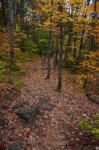 Autumn leaves decorate the path through the forest in Oxtongue River-Ragged Falls Provincial Park in Ontario, Canada.