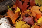 Photo: Autumn Leaf Colors Algonquin Provincial Park Ontario