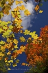 Photo: Autumn Tree Display Algonquin Provincial Park Ontario