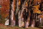 Photo: Autumn Trees Nova Scotia
