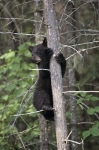 Photo: Bear Tree