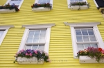 On the exterior of each window on the houses in the downtown core of St. John's, Newfoundland, the potted plants are blossoming in an array of brilliant hues.