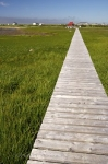 Photo: Board Walk Newfoundland