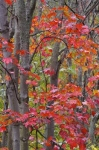 Photo: Bright Colored Leaves Rock Lake Road Ontario