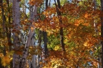 Photo: Brilliant Colored Autumn Trees Ontario Canada