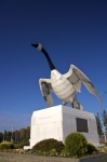 Outside the information centre in the town of Wawa, Ontario in Canada, a large Canada Goose statue overlooks the area.