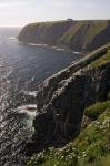 Photo: Cape St Marys Cliffs Newfoundland