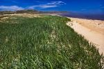 Green vegetation grows along the sand dunes that adorn the banks at the mouth of the Pinware River in Southern Labrador, Canada.