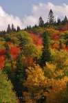 Colorful trees adorn the slopes of the mountains in Parc National du Mont Tremblant in Quebec, Canada during the Autumn.