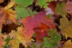 Photo: Colorful Leaves Algonquin Provincial Park