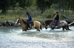 Typical romantic country life, freedom on horses in Blaeberry Valley, Golden, BC, Goldenwood Lodge.