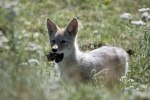 Photo: Coyote Picture Canada Wilderness
