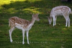 Photo: Cute Deer Picture Parc Omega Montebello Quebec