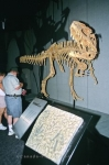 Photo: Dinosaur Bones Drumheller