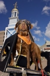 A cool dog adorned in his Harley Davidson motorcycle attire ready to cruise on from the waterfront in Halifax, Nova Scotia.