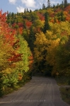 Photo: Fall Colours Gravel Road Quebec Provincial Park