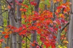 Photo: Fall Foliage Algonquin Provincial Park