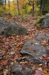 Photo: Fall Forest Path Ontario Canada