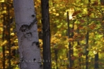 Photo: Fall Tree Bark Algonquin Provincial Park Road