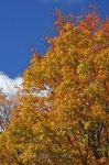 Photo: Fall Tree Algonquin Provincial Park Ontario