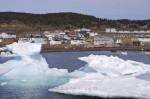 The small fishing town of Conche in Newfoundland, Canada has their harbour filled yearly with the pack ice which has broken away from the larger icebergs.