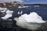 The pack ice floating around the harbour of St. Anthony, Newfoundland, melting a little more each day during the summer.