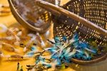 Photo: Fly Fishing Flies