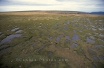 Photo: Gros Morne National Park Marshlands