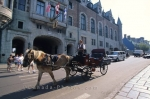 Many people enjoy the comfort of the horse drawn buggy rides in Quebec City to do their sightseeing or to get from place to place.