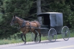 Photo: Horse Drawn Carriage St Jacobs