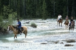 Horseriding, pristine streams and forests in Blaeberry Valley, Golden, British Columbia.