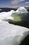 A large piece of ice floating in St. Anthony harbour in Newfoundland, Canada will slowly melt away once it has reached this point.