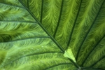 Photo: Leaf Design Alaska USA
