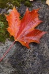 Photo: Leaf Picture Algonquin Provincial Park
