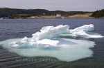 The pack ice is slowly melting as it floats around in St Lunaire-Griquet Harbour in Newfoundland, Canada.