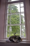 In the window of the Memorial Church at the Grand Pre National Historic Site in the Bay of Fundy, Nova Scotia, a cat rests peacefully on his pillow.