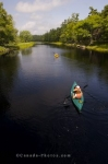 Two sets of kayakers slowly make their way along the Mersey River where the wilderness of Kejimkujik National Park in Nova Scotia encompasses them on both river banks.