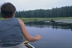 Canoeing on a lake in Algonquin Provincial Park in Ontario, Canada is a great way to watch a moose feed in its natural habitat.
