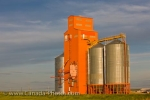 The grain elevators brightly adorning the open landscape in the town of Morse in Saskatchewan, Canada.