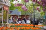 Visitors to the beautiful town of Niagara-on-the-Lake in Ontario, Canada can tour amongst the spring blossoms and historic buildings on a horse and carriage adventure.