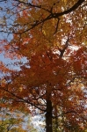 Photo: Ontario Autumn Trees Algonquin Provincial Park