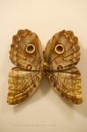 Photo: Owl Butterfly Venezuela Newfoundland Insectarium And Butterfly Pavilion