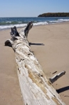 A large log has lost its way and has become stranded on the beach at Pancake Bay on Lake Superior in Ontario, Canada.