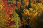 When fall has settled in around Parc national du Mont Tremblant in Quebec, Canada, the vibrant colors explode from the depths of the forest.