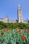 A garden of beautiful red tulips add to the beauty of Centre Block and Peace Tower of the Parliament Buildings.